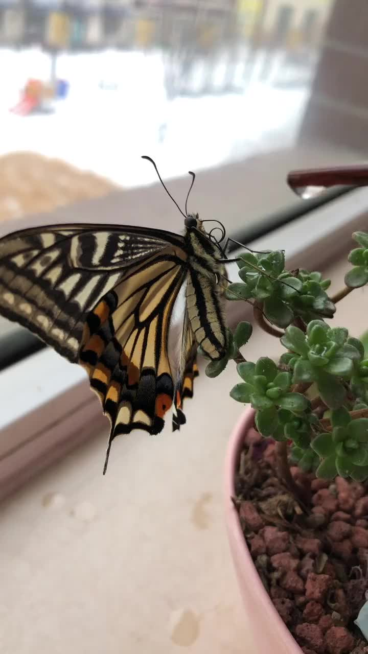 Feeding a butterfly GIFs