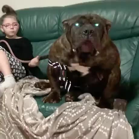 Watch and share Absolute Unit GIFs and Dog GIFs by elRellano.com on Gfycat