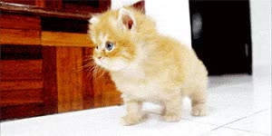 Watch and share Cute Kitten GIFs on Gfycat