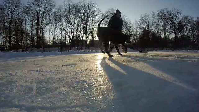 Watch Pond hockey vs a pitbull. GIF by @nicklasryskasen on Gfycat. Discover more airbud, gopro, ice hockey, pitbull, pond hockey, pondhockey, pondhockey.gopro, puck. pitbull. dog GIFs on Gfycat