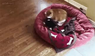 Watch Pussy picks on small child, then dad steps in. • r/pussypassdenied GIF on Gfycat. Discover more related GIFs on Gfycat