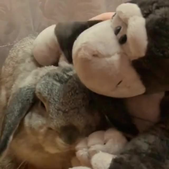 Funny Bunny Gif By At Cappincrunch Find Make Share Gfycat Gifs