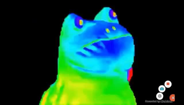 Watch and share Rainbow Frog 1 Hour GIFs on Gfycat