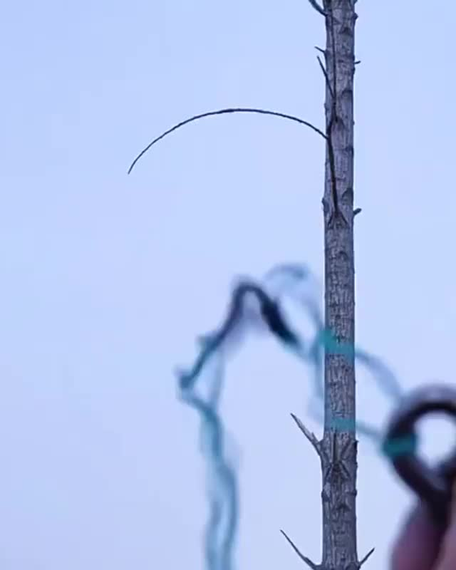 Watch and share Slingshot Vs Tree Branches GIFs on Gfycat