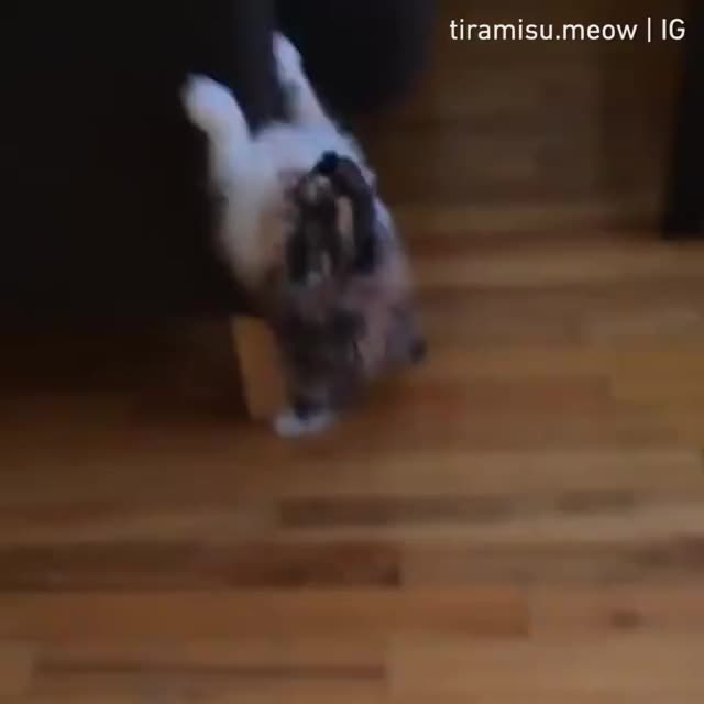 Watch and share Sofa GIFs and Cat GIFs by nitori on Gfycat