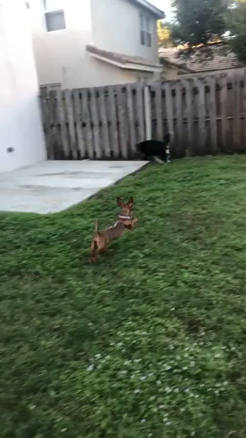 Watch and share Eyebleach GIFs and Zoomies GIFs by notmyproblem on Gfycat