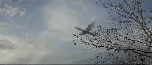 Watch BirdPlane GIF by @elfa82 on Gfycat. Discover more gfycats GIFs on Gfycat