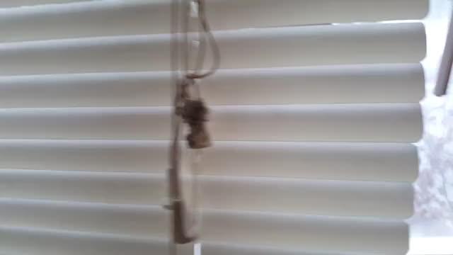 Watch Moose in the Window || ViralHog GIF by Slim Jones (@slimjones123) on Gfycat. Discover more viralhog GIFs on Gfycat