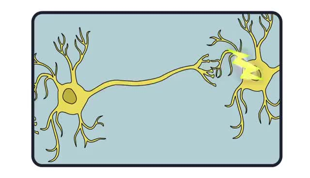 Watch Neurons firing GIF on Gfycat. Discover more Neurons, nerves GIFs on Gfycat