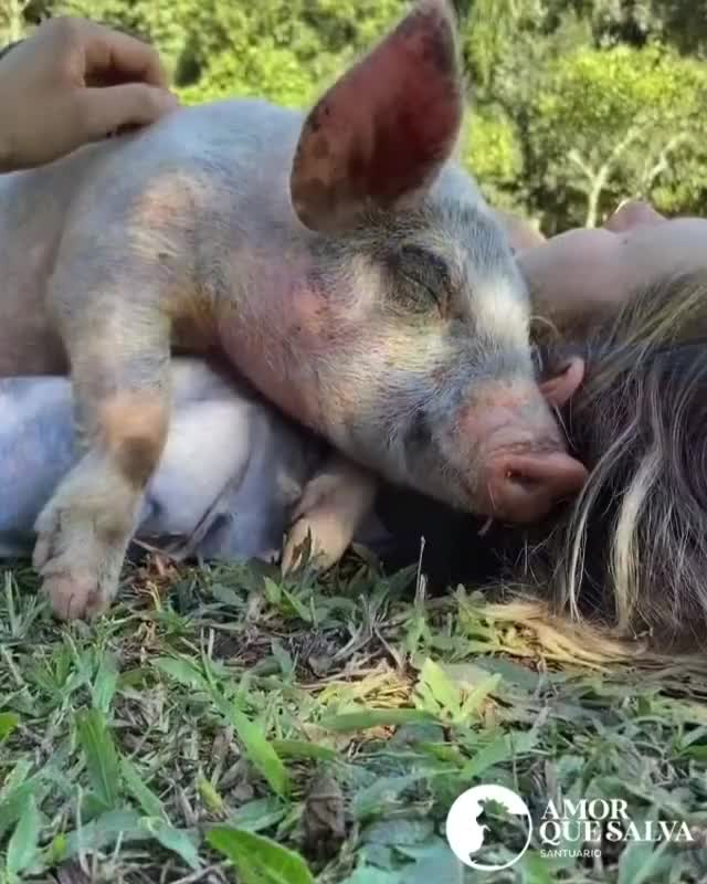 Watch and share Kindness GIFs and Animals GIFs by lnfinity on Gfycat