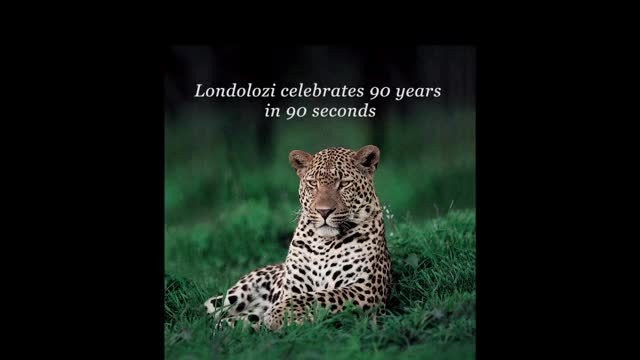 Watch and share Londolozi GIFs by Londolozi Game Reserve on Gfycat