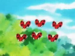 Watch AP Pokemon GIF on Gfycat. Discover more ledyba, pokemon GIFs on Gfycat