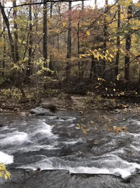 Watch mills river GIF on Gfycat. Discover more related GIFs on Gfycat