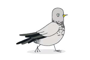Watch pigeon walk GIF on Gfycat. Discover more related GIFs on Gfycat