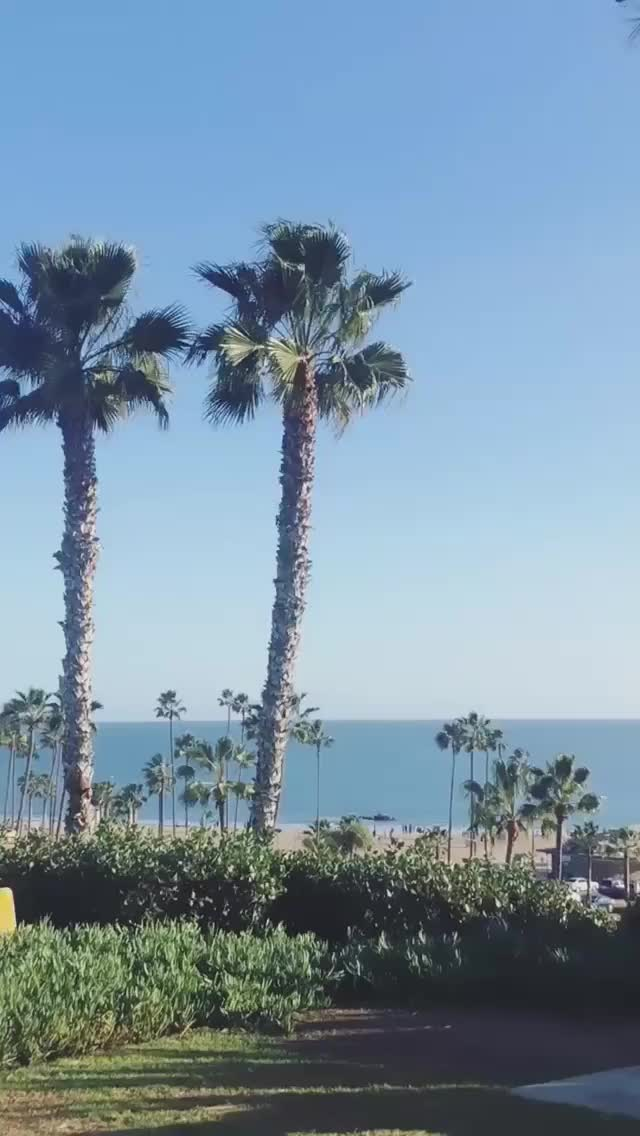 Watch and share Charlottemckinney 2018-12-26 07:21:11.632 GIFs by Pams Fruit Jam on Gfycat