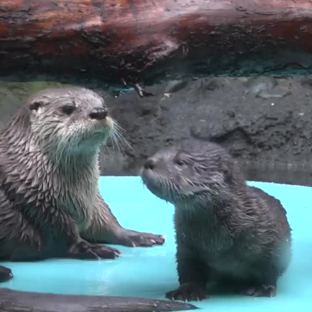 Watch and share Oregon Zoo GIFs by Jackson3OH3 on Gfycat