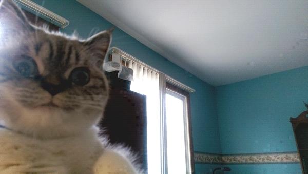 aww, sammixxlove's insane cat GIFs