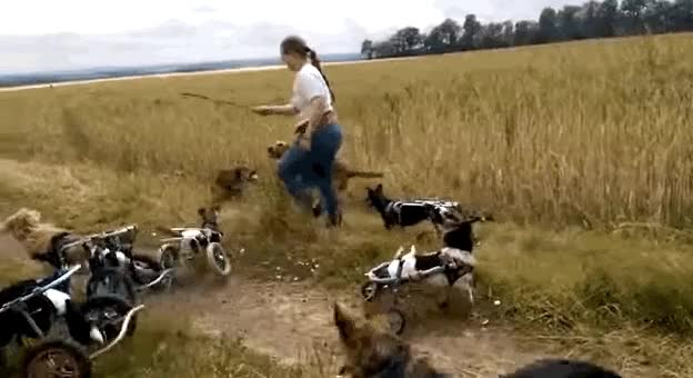 Watch wheelie fetch GIF on Gfycat. Discover more related GIFs on Gfycat