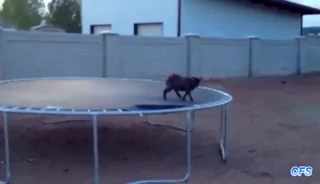 Watch and share Funny GIFs and Goats GIFs on Gfycat