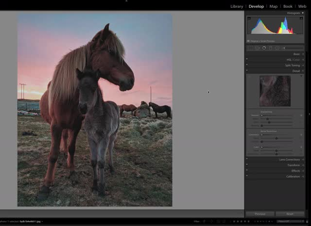 Watch horses GIF by @mrivorey on Gfycat. Discover more Lightroom, Straighten Tool GIFs on Gfycat