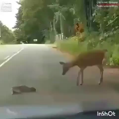 Stranded lil deer saved by her mama GIFs