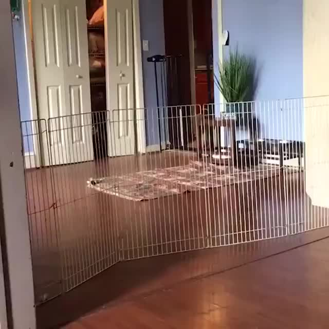Watch and share A Genius Way To Stop Dog From Escaping! GIFs by GIFs For Everything on Gfycat