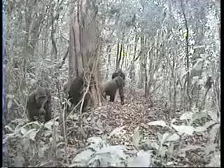 Watch gorilon GIF on Gfycat. Discover more golpea, gorila, loco, selva GIFs on Gfycat