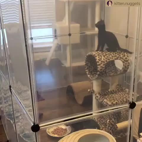 Watch this cat GIF by Pakalu Papito (@entfanatic) on Gfycat. Discover more bgeeert, cat, free, kitten, kitty, prison GIFs on Gfycat