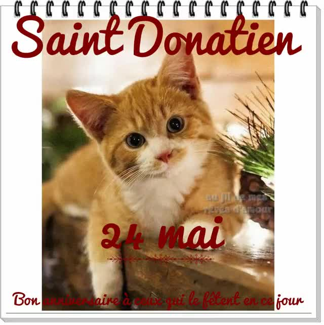 Watch and share Saint Donatien GIFs by eleonora on Gfycat