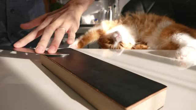 Watch Sharpening a $1 knife GIF by @hooshang on Gfycat. Discover more cat, cook, jun GIFs on Gfycat