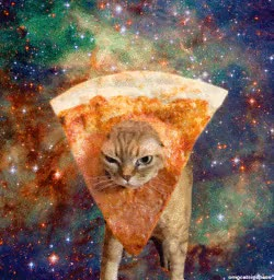 Watch and share Omg Cats In Space!!! #cat #humor #cats #funny #cute #meme =^..^= Www.zazzle.com/kittyprettygifts GIFs on Gfycat
