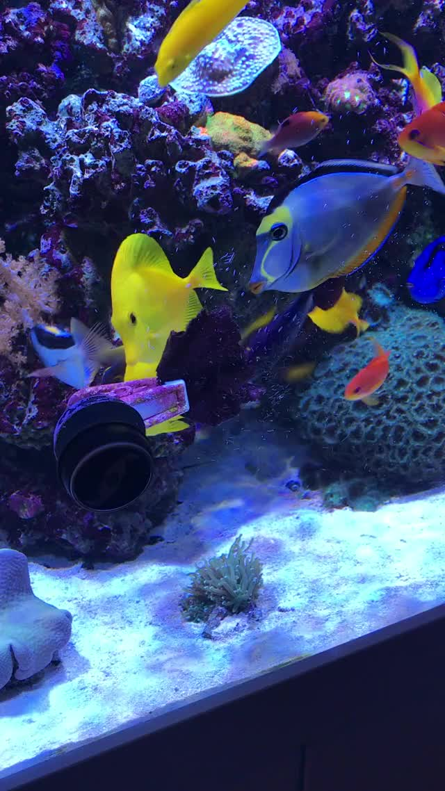 Watch and share Reeftank GIFs by Craig Williams on Gfycat