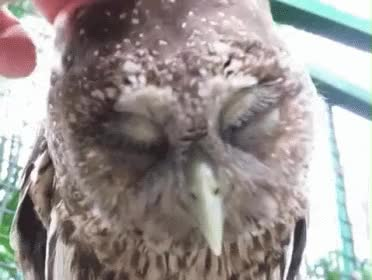Watch this owl GIF on Gfycat. Discover more owl GIFs on Gfycat