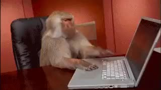 Watch this monkey GIF on Gfycat. Discover more GIF, animals, computer, gif, laptop, monkey, primate, typing, working, zoo GIFs on Gfycat