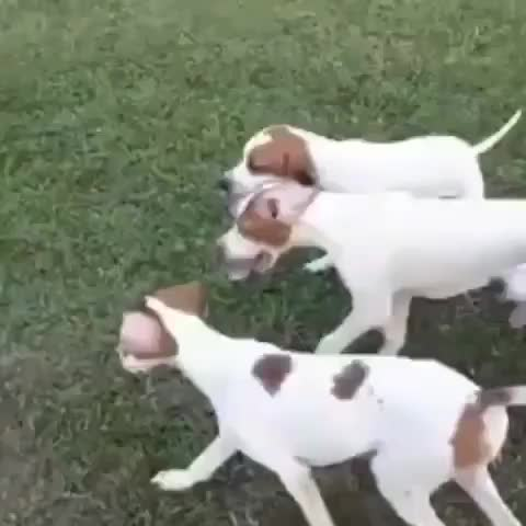 Watch and share Puppies GIFs by Taykaybo on Gfycat