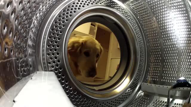 Watch and share Cute GIFs and Dog GIFs by Anawin Leblac Chaiwong on Gfycat