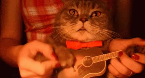 Watch and share Guitar GIFs and Cat GIFs on Gfycat