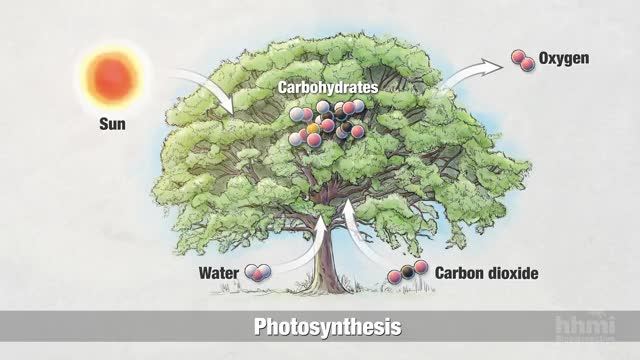 Watch and share Photosynthesis:: Chemical Process GIFs by GIFs For Everything on Gfycat