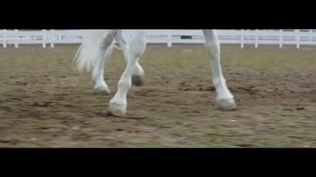 Watch and share Horse GIFs by Richard Rabbat on Gfycat