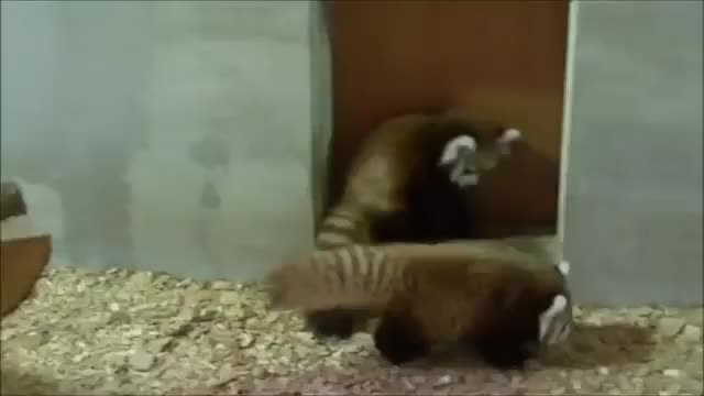 Watch and share Hitmanimals GIFs and Aww GIFs on Gfycat