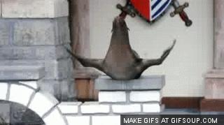 tifu, Seal GIFs