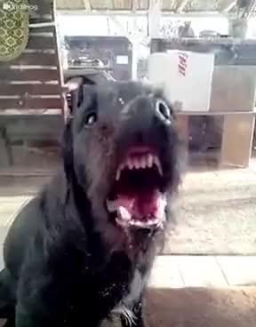 Watch and share Dog Licks Window GIFs on Gfycat