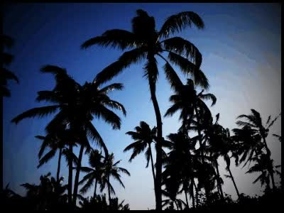 Watch and share Waving Palms GIFs on Gfycat