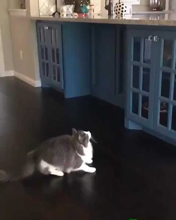 Watch and share Cuteanimals GIFs and Adorable GIFs by The New Paper on Gfycat