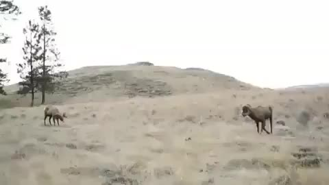 deer, funny, lmao, nature, Head Shot GIFs