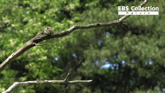 Watch and share The Siberian Flying Squirrel GIFs by Pardusco on Gfycat