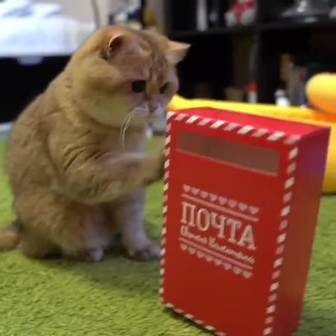 cat, cat taps, cats, cattaps, Tap the box GIFs