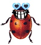 Watch and share Beetle animated stickers on Gfycat