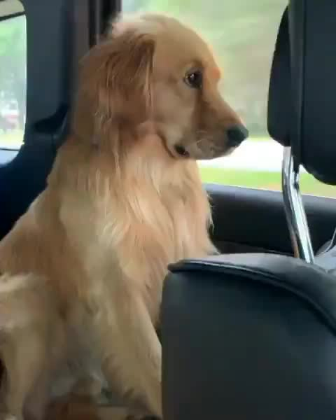 dog, Pupper wants to go back to the beach GIFs