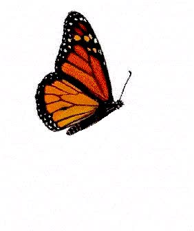 Watch and share Butterfly animated stickers on Gfycat